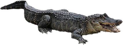 Alligator Eyes Clip Art