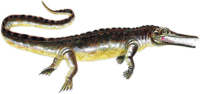 early alligator