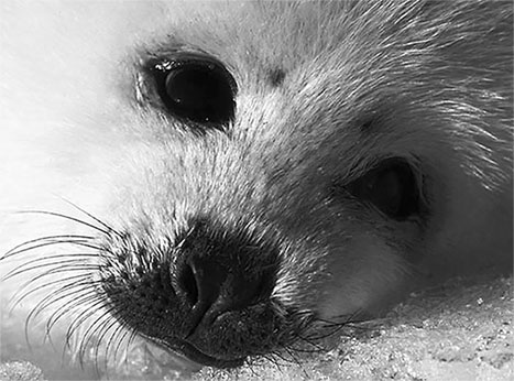 face of seal