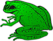 Free Animated Frog Gifs - Frog Clipart