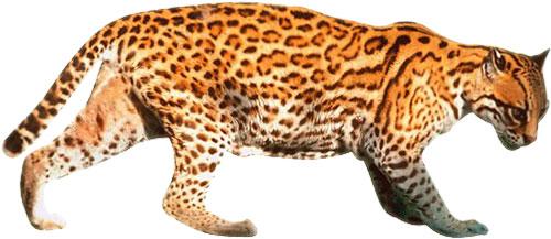 A Big Cat Clipart