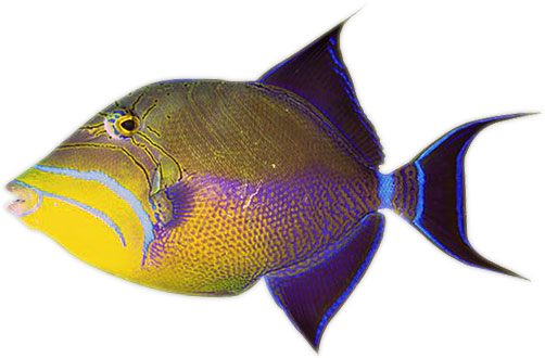 Fish animated. Gifs free clipart