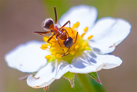 ant and flower