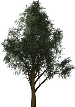 Free Arbor Day Clipart Animations