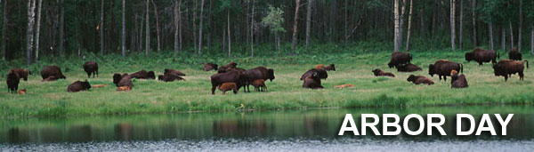 Arbor Day with bison, lake and trees