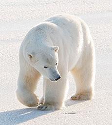 free bear gifs animated bears bear clipart