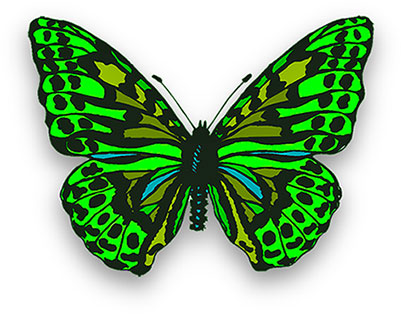 Animated butterfly. Free animations gifs clipart