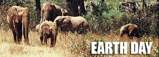 Earth Day with wild elephants