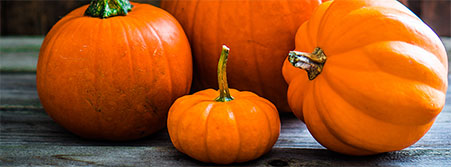 pumpkins photo image