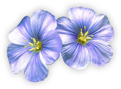 Free Flower Clipart Images - Gifs