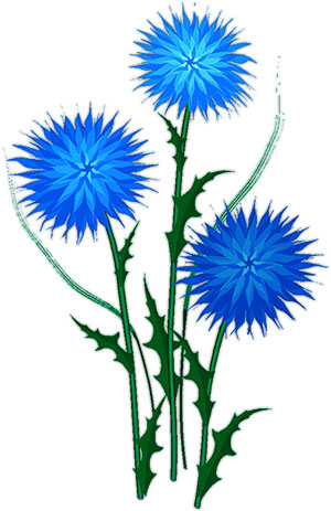 Flower Clipart Blue And White