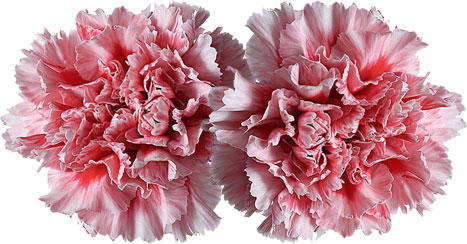 Free flower clipart images gifs pink flowers mightylinksfo