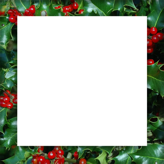 holly border square