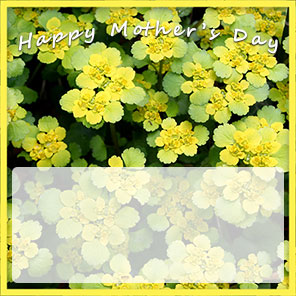 Mother's Day yellow flowers