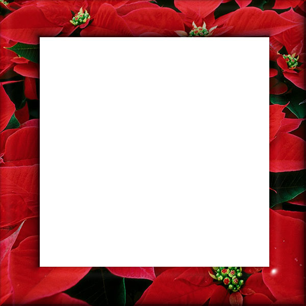 square poinsettia border