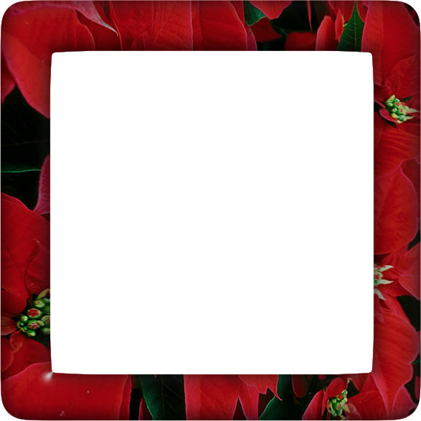 poinsettia border with rounded corners