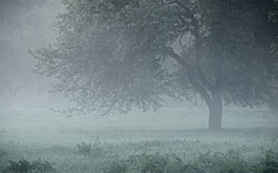 tree and fog