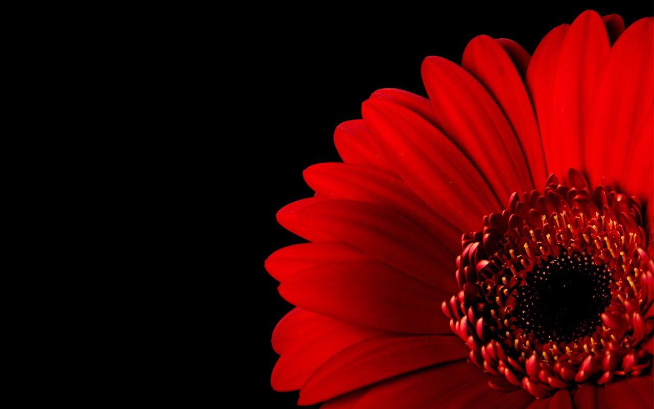 Free background images clipart wallpaper backgrounds - Red flower desktop wallpaper ...
