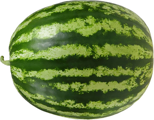 large watermelon